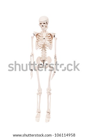 Human skeleton in details isolated on white - stock photo