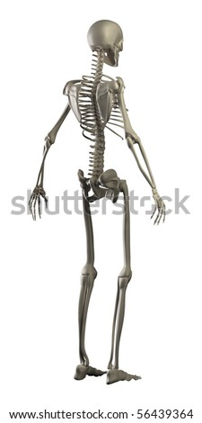 Human skeleton isolated - stock photo