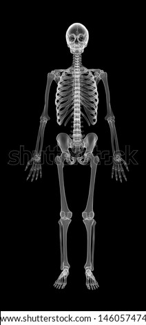 Human Skeleton isolated on black with X-ray  effect  - stock photo
