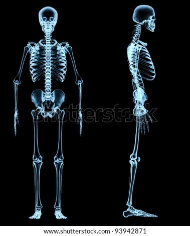 human skeleton under the x-rays - stock photo