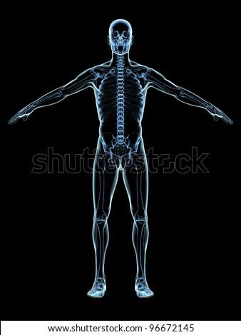 Human Skeleton Xray on black - stock photo