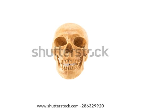 Human skull after death, no flesh covering. On a white background, isolated. - stock photo