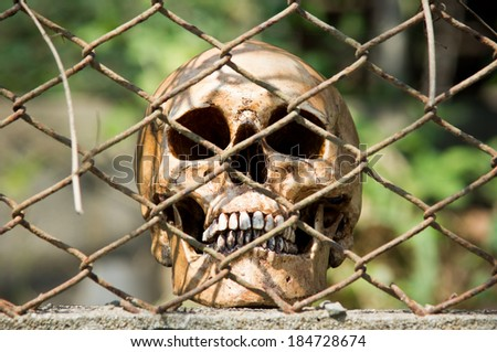 Human skull behind metal mesh fence in detain concept