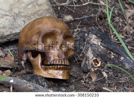 Human skull bone laying on the ground - stock photo