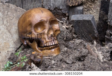 Human skull bone laying on the  on a grave - stock photo