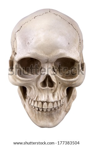 Human skull (cranium) isolated on white background - stock photo