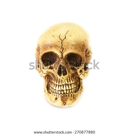 Human skull (cranium) on white background - stock photo