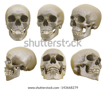 human skull different angles isolated stock illustration 143668279, Skeleton