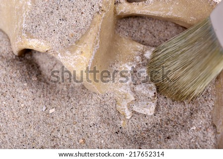 Human skull in sand and brush closeup