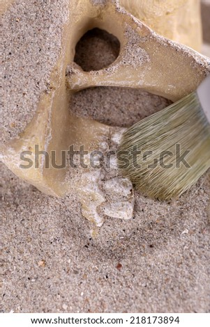 Human skull in sand and brush closeup - stock photo