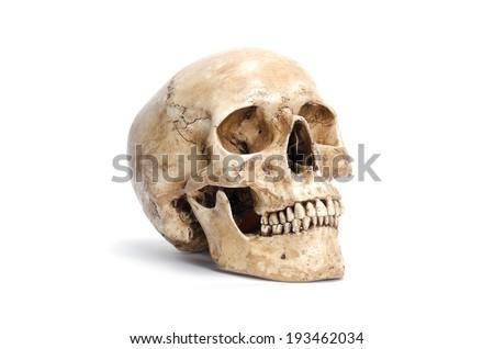 human skull isolated - stock photo