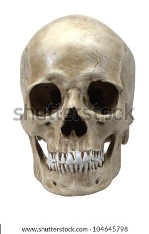 human skull model isolated on white background - stock photo