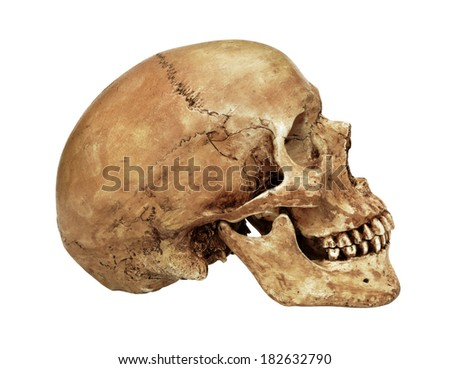 Human skull model isolated on white background with working path - stock photo