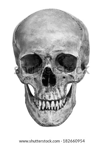 Human skull model isolated on white background with working path black and white version - stock photo