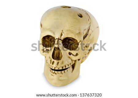 Human skull model isolated with clipping path on white background - stock photo
