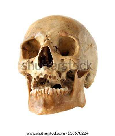 Human skull on a white background. - stock photo