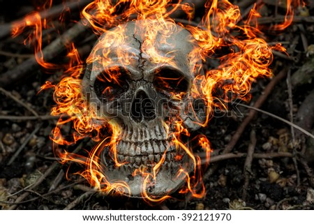 human skull on fire in forest darkness concept; horror halloween - stock photo