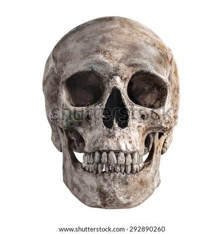 Human skull on isolated white background - stock photo