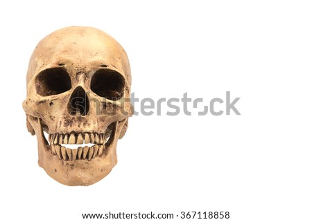 Human skull on isolated white background - stock photo
