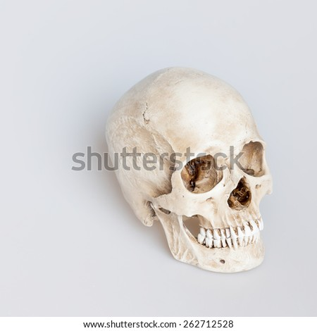 Human skull on isolated white background, by the side - stock photo