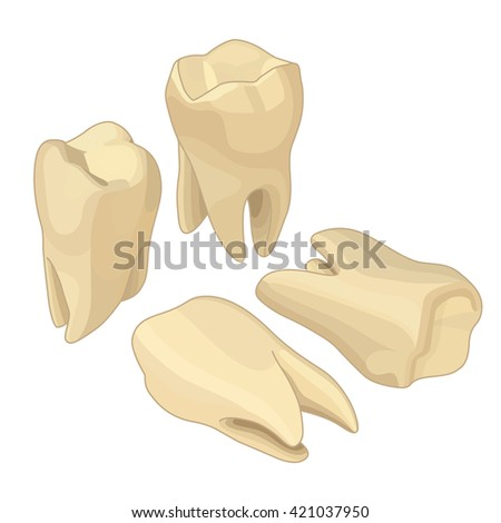 Human teeth isometric flat icons set. Dental implant flat isometric illustration, Human tooth isolated on white. - stock photo