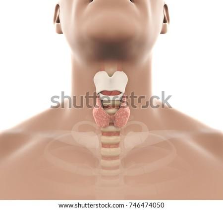 thyroid dansk