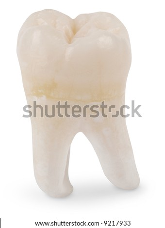 Human wisdom tooth isolated on white with a clipping path - stock photo