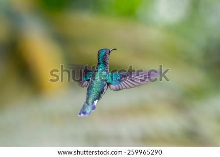 Humming bird flying close up - stock photo