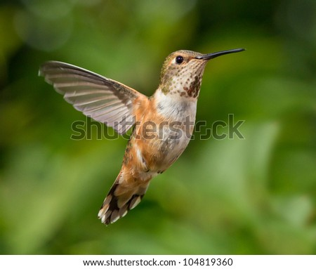 Humming flying with natural green background - stock photo