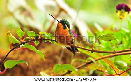 hummingbird 1 - stock photo