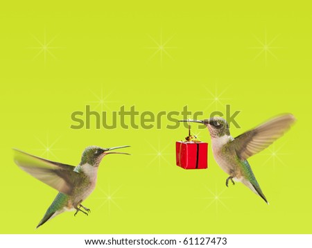 Hummingbird carrying a gift to another one on bright green background with copy space - stock photo