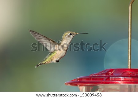 Hummingbird flying next to a red bird feeder preparing to land with a blurred background - stock photo