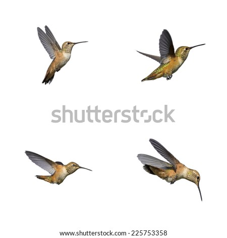 Hummingbird isolated on white - stock photo