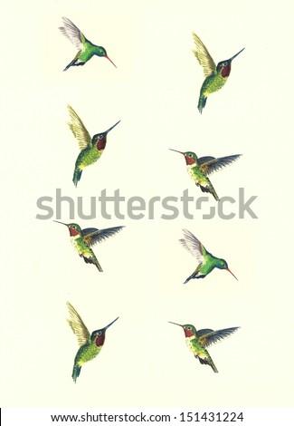 Hummingbirds Background - stock photo