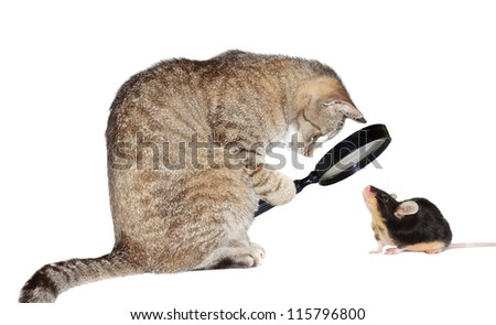 Humorous conceptual image of a nearsighted cat with myopia peering at a little mouse through a magnifying glass isolated on white - stock photo
