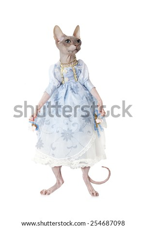 Humorous image of Sphinx cat dressed as a doll in front of white background - stock photo
