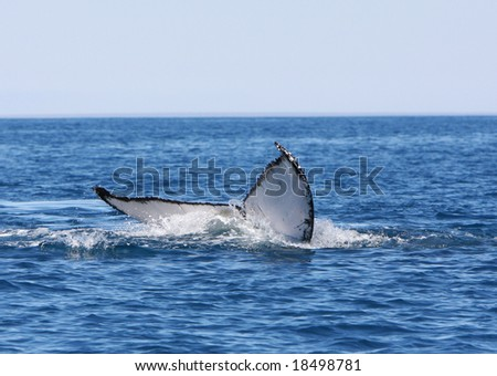 hump back whale tail - stock photo