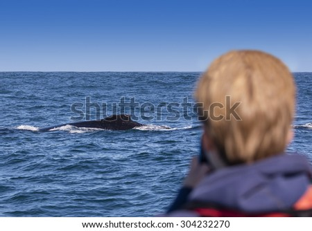 Humpback whale watching off the coast of Knysna, South Africa - stock photo