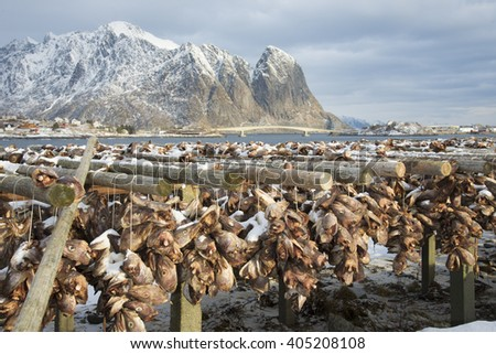 Hundreds of cod heads drying in the Lofoten Islands, Norway, Europe