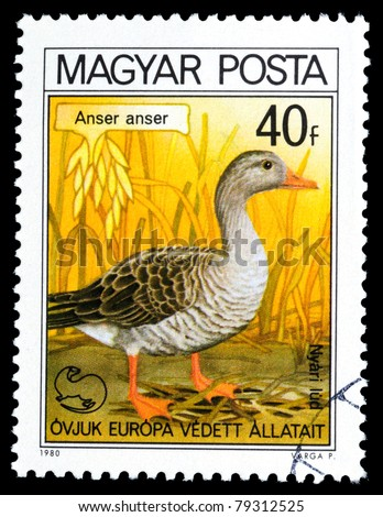 HUNGARY - CIRCA 1980: A post stamp printed in Hungary shows image Anser, circa 1980