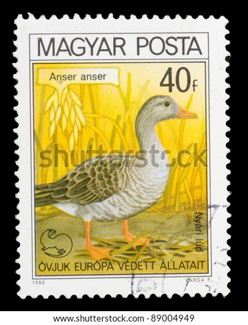 HUNGARY - CIRCA 1980: A post stamp printed in Hungary shows image Anser, circa 1980 - stock photo