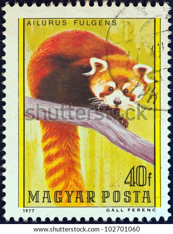 "HUNGARY - CIRCA 1977: A stamp printed in Hungary from the ""Bears"" issue shows a Red Panda, circa 1977."