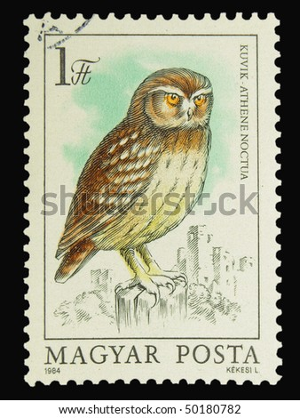 HUNGARY - CIRCA 1984: A stamp printed in Hungary showing Little Owl circa 1984