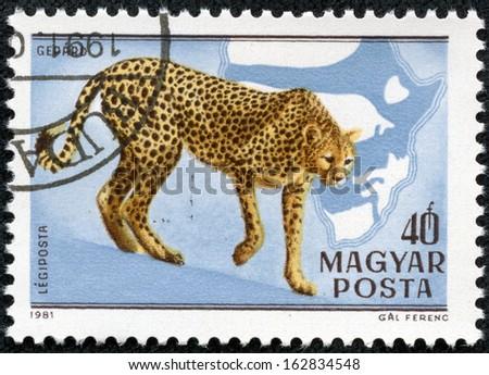 HUNGARY - CIRCA 1981: A stamp printed in HUNGARY shows a Acinonyx jubatus, Africa series, circa 1981 - stock photo