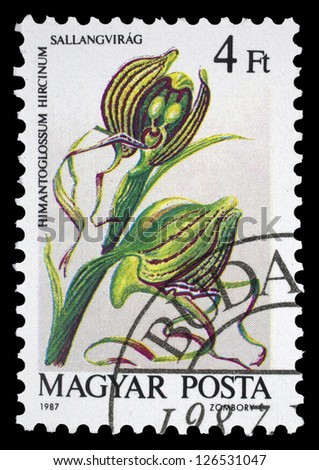 "HUNGARY - CIRCA 1984: A stamp printed in Hungary shows a edible Field mushroom (Agaricus campester), with the same inscriptions, from the series ""Edible Mushrooms"", circa 1984"