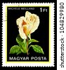 """HUNGARY - CIRCA 1982: A stamp printed in Hungary shows a rose with the inscription """"Michele Meilland"""", from the series """"Flowers"""", circa 1982 - stock photo"""