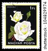 """HUNGARY - CIRCA 1982: A stamp printed in Hungary shows a rose with the inscription """"Pascali"""", from the series """"Flowers"""", circa 1982 - stock photo"""