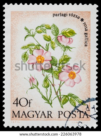 "HUNGARY - CIRCA 1973: A stamp printed in Hungary shows French Rose ""Rosa gallica"", circa 1973 - stock photo"