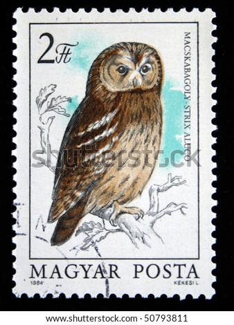 HUNGARY - CIRCA 1984: A stamp printed in Hungary shows Little Owl - Athene noctua, circa 1984