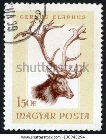 HUNGARY - CIRCA 1966: post stamp printed in Hungary (Magyar) shows red deer (cervus elaphus) from hunting trophies - animals in natural colors series, Scott catalog 1784 A383 1.50fo brown, circa 1966 - stock photo